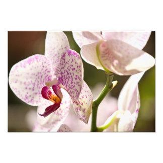 Orquídeas Fotos