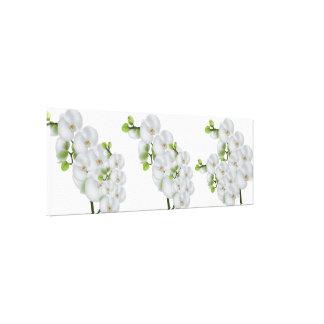 Orquídeas Arte-Brancas da parede das canvas