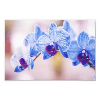 Orquídeas azuis foto arte