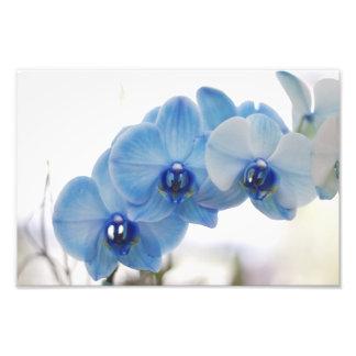 Orquídeas azuis fotografias