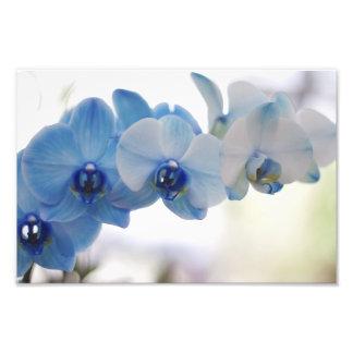 Orquídeas azuis fotos
