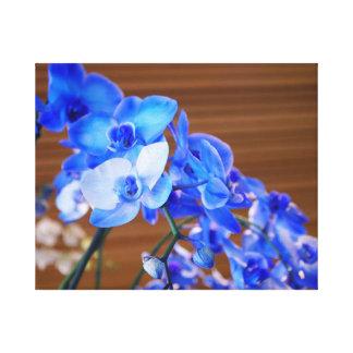 Orquídeas azuis impressão em tela