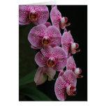Orquídeas Cartão