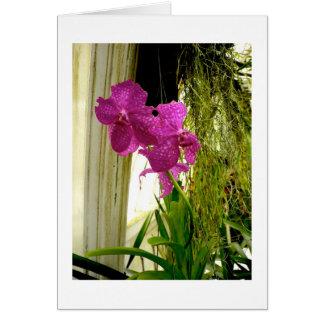 Orquídeas Cartão Comemorativo