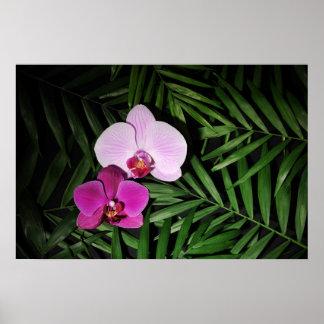 Orquídeas com folhas de palmeira poster