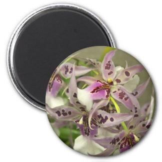 Orquídeas cor-de-rosa ímã redondo 5.08cm