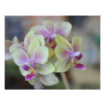 Orquídeas de creme selvagens convites personalizado