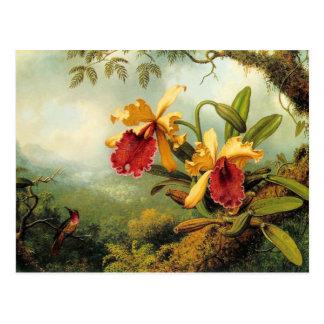 Orquídeas e cartão dos colibris
