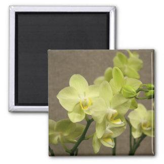 Orquídeas Ímã Quadrado