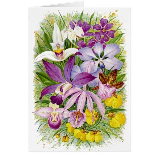 Orquídeas Notecard floral da antiguidade/vintage Cartão