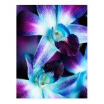 Orquídeas personalizadas do Dendrobium orquídea ro Cartao Postal