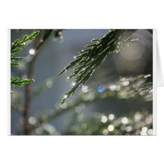 orvalho sparkling na árvore de Cypress Cartoes