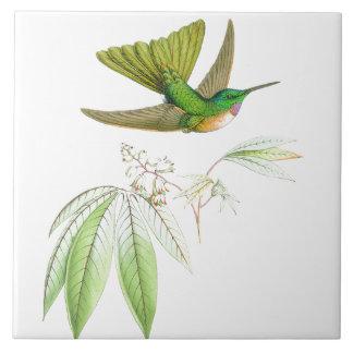 Os animais selvagens dos pássaros do colibri
