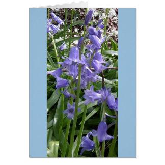 Os Bluebells fecham-se acima do cartão com fotos -