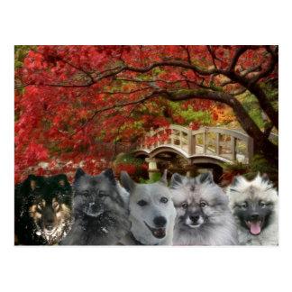 Os cães do cartão da pensão