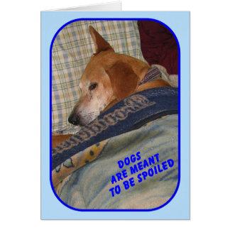 """Os """"cães são significados ser"""" cartão estragado"""