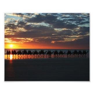Os camelos do cabo encalham, Broome, Austrália 10  Impressão De Foto