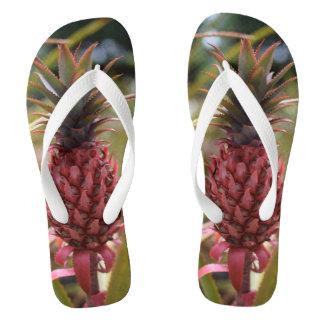 Os chinelos cor-de-rosa do abacaxi