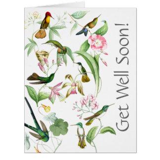 Os colibris obtêm a poço logo dtodos nós o cartão