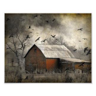 Os corvos Roguish criaram um Crownado Impressão De Foto