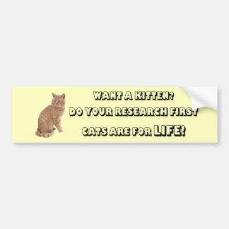 Os gatos britânicos de Shorthair realizam-se para  Adesivo Para Carro