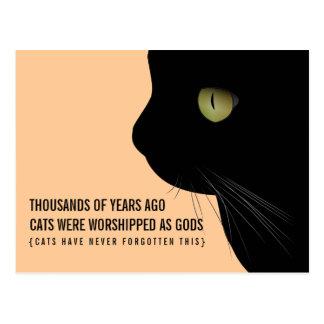 Os gatos foram adorados como o cartão engraçado