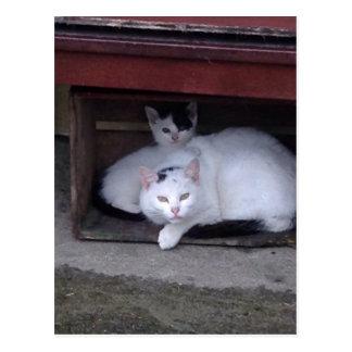 Os gatos irlandeses tomam a ShelterOn um o dia Cartão Postal