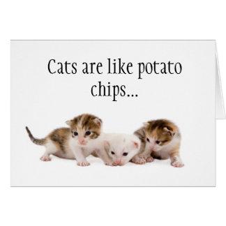 Os gatos são como o cartão de aniversário