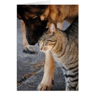 Os melhores amigos gato & o cartão do german