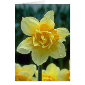 """os narciso dobro amarelos, """"Texas"""" florescem Cartão"""