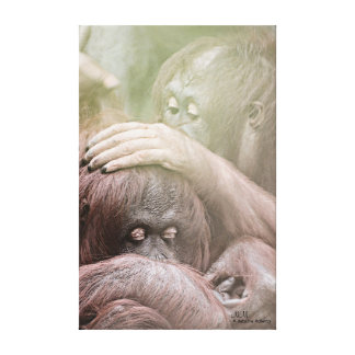 Os orangotango esticaram o impressão das canvas