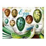 Os ovos dos pássaros coloridos cartões postais