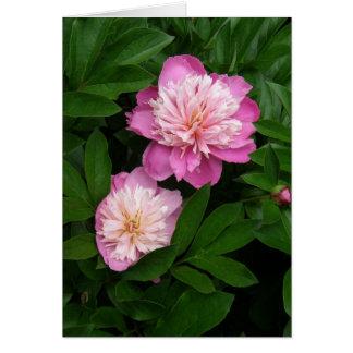 Os pares de 2 tonificaram peônias cor-de-rosa cartão comemorativo