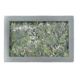 Os ramos de oliveira com primeiros brotam