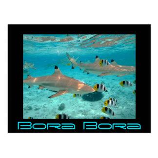Os tubarões na lagoa de Bora Bora enegrecem o Cartão Postal