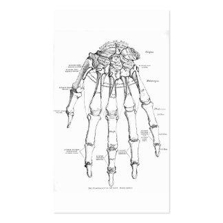 Ossos da anatomia | do vintage da mão cartão de visita