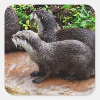 Otterly a bonitos, etiquetas quadradas da lontra