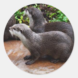 Otterly a bonitos, etiquetas redondas da lontra