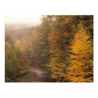 Outono de Berkshires do ribeiro do moinho Cartão Postal