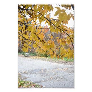 Outono na foto do parque NYC do beira-rio da Nova