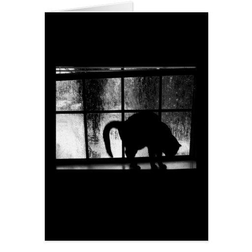 Outubro rega a silhueta do gato na janela 2 B&W Cartao