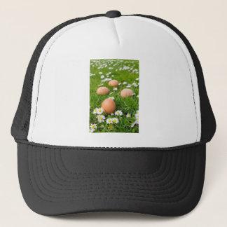 Ovos da galinha na grama do primavera com boné