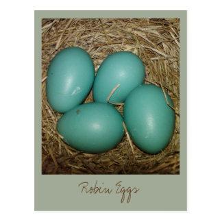 Ovos do pisco de peito vermelho no ninho cartão postal