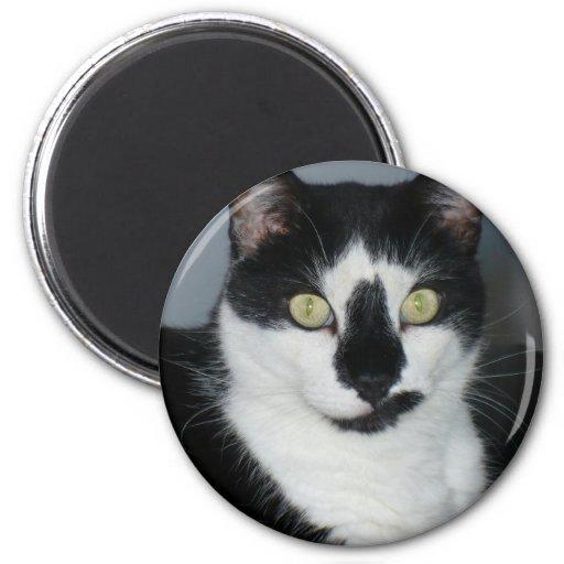 Paco o gatinho imãs de geladeira