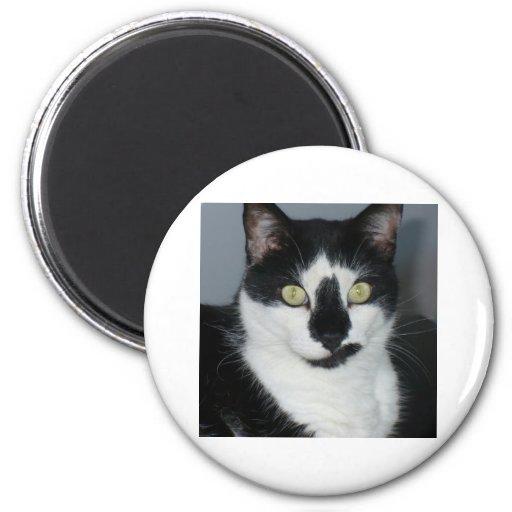 Paco o gatinho ima de geladeira