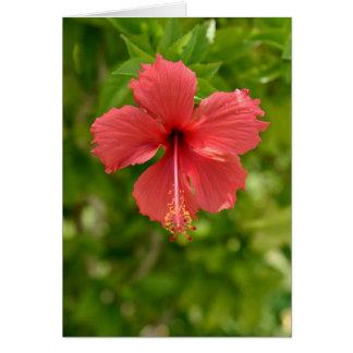 """Padrão vermelho do cartão do hibiscus (5"""" x 7"""")"""