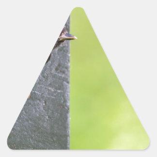 Pai do melro no furo da caixa-ninha adesivo triangular