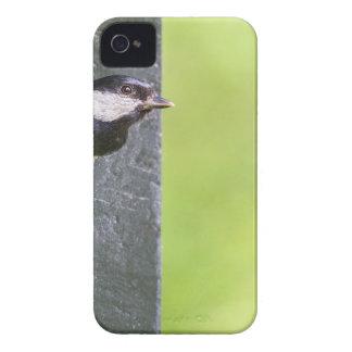 Pai do melro no furo da caixa-ninha capinha iPhone 4
