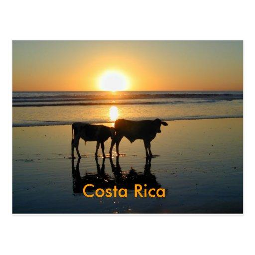 País da vaca, Costa Rica Cartao Postal