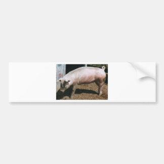 país do porco adesivo para carro